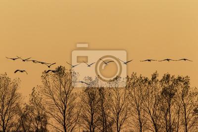 """Постер Птицы """"Постер 44384044"""", 30x20 см, на бумаге от Artwall"""