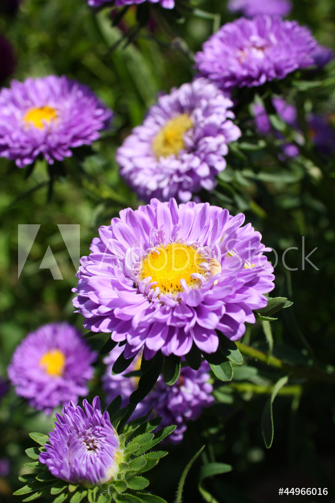 """Постер Цветы """"Постер 44966016-177"""", 20x30 см, на бумаге от Artwall"""