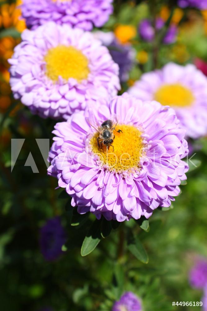 """Постер Цветы """"Постер 44966189-177"""", 20x30 см, на бумаге от Artwall"""