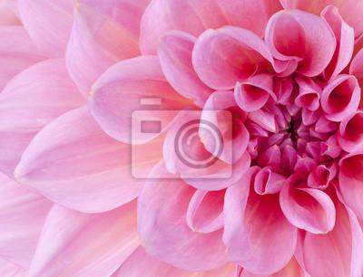 """Постер Цветы """"Постер 45397071"""", 26x20 см, на бумаге от Artwall"""