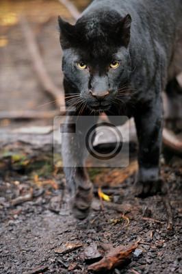 """Постер Животные """"Черный леопард"""", 20x30 см, на бумаге от Artwall"""