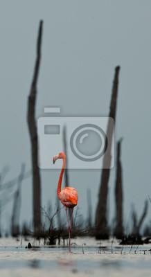 """Постер Птицы """"Постер 45708834"""", 20x37 см, на бумаге от Artwall"""