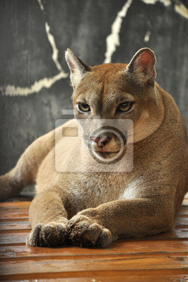 """Постер Животные """"Постер 45860346"""", 20x30 см, на бумаге от Artwall"""