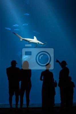 """Постер Подводный мир """"Постер 46055097"""", 20x30 см, на бумаге от Artwall"""