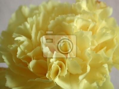 """Постер Цветы """"Постер 477068"""", 27x20 см, на бумаге от Artwall"""