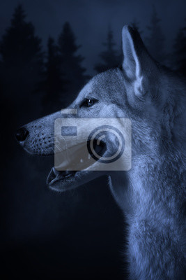 """Постер Животные """"Постер 47824430"""", 20x30 см, на бумаге от Artwall"""