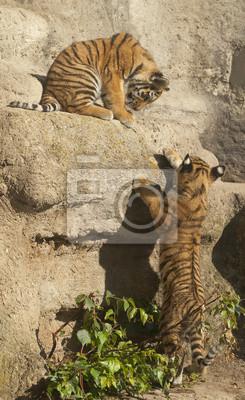 """Постер Животные """"Постер 47969646"""", 20x33 см, на бумаге от Artwall"""