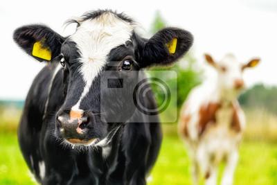 """Постер Животные """"Постер 48113086"""", 30x20 см, на бумаге от Artwall"""