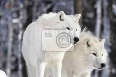 """Постер Животные """"Постер 48166056"""", 30x20 см, на бумаге от Artwall"""
