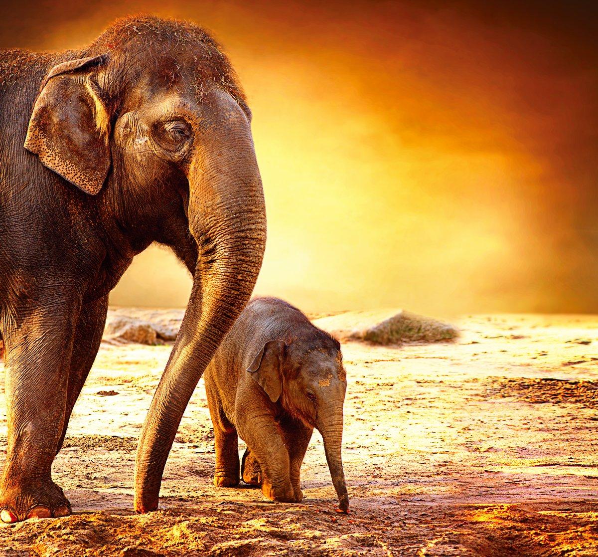 """Постер Животные """"Постер 48193474"""", 21x20 см, на бумаге от Artwall"""