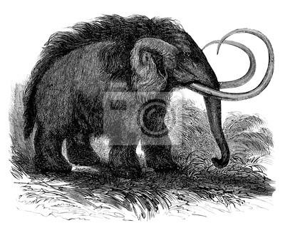 """Постер Животные """"Предыстория - Шерстистого Мамонта"""", 25x20 см, на бумаге от Artwall"""