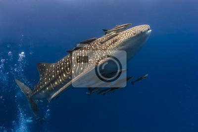 """Постер Подводный мир """"Постер 48324442"""", 30x20 см, на бумаге от Artwall"""