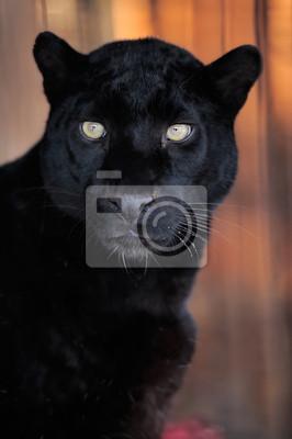 """Постер Животные """"Леопард портрет"""", 20x30 см, на бумаге от Artwall"""