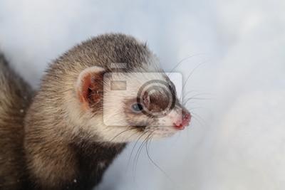 """Постер Животные """"Постер 48766843"""", 30x20 см, на бумаге от Artwall"""