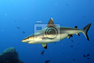 """Постер Подводный мир """"Постер 48793097"""", 30x20 см, на бумаге от Artwall"""