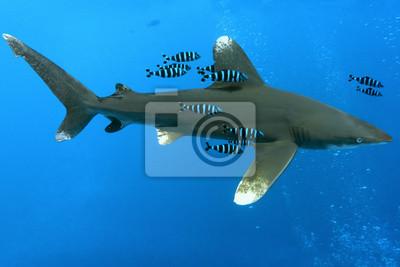 """Постер Подводный мир """"Постер 48914115"""", 30x20 см, на бумаге от Artwall"""