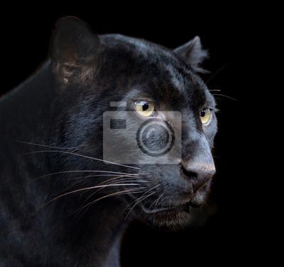 """Постер Животные """"Черная Пантера"""", 21x20 см, на бумаге от Artwall"""