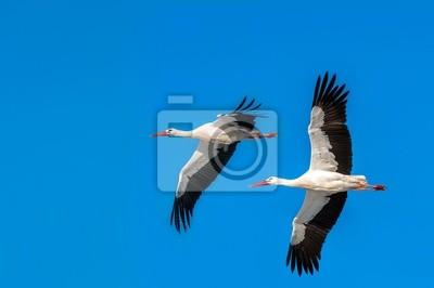 """Постер Птицы """"Постер 51058206"""", 30x20 см, на бумаге от Artwall"""