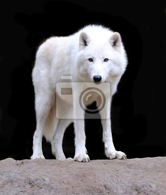 """Постер Животные """"Постер 51140694"""", 20x24 см, на бумаге от Artwall"""