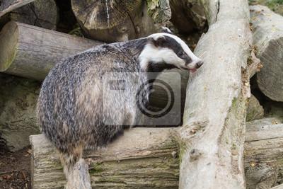 """Постер Животные """"Постер 51210869"""", 30x20 см, на бумаге от Artwall"""