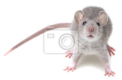 """Постер Животные """"Постер 51557006"""", 31x20 см, на бумаге от Artwall"""