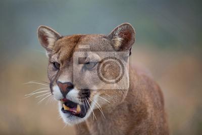 """Постер Животные """"Постер 51567770"""", 30x20 см, на бумаге от Artwall"""
