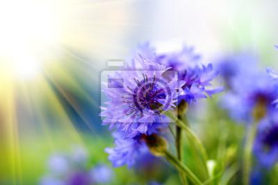 """Постер Цветы """"Постер 52572756"""", 30x20 см, на бумаге от Artwall"""