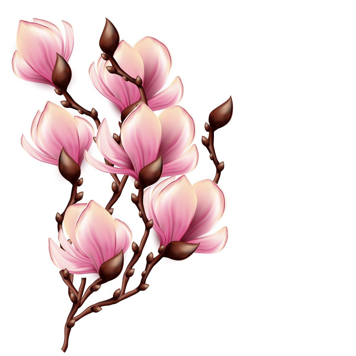 """Постер Цветы """"Постер 53022411"""", 20x20 см, на бумаге от Artwall"""