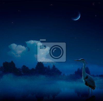 """Постер Птицы """"Постер 53171420"""", 20x20 см, на бумаге от Artwall"""