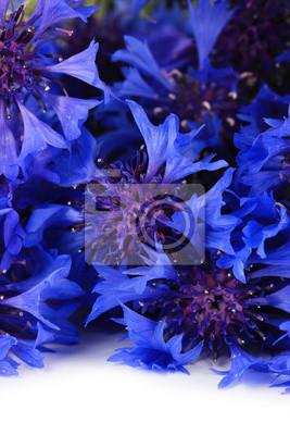 """Постер Цветы """"Постер 53307450"""", 20x30 см, на бумаге от Artwall"""