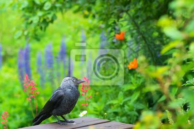 """Постер Птицы """"Постер 53576512"""", 30x20 см, на бумаге от Artwall"""