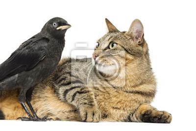 """Постер Птицы """"Постер 54444026"""", 30x20 см, на бумаге от Artwall"""