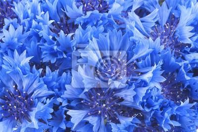 """Постер Цветы """"Постер 54580400"""", 30x20 см, на бумаге от Artwall"""