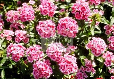 """Постер Цветы """"Постер 5484992"""", 29x20 см, на бумаге от Artwall"""