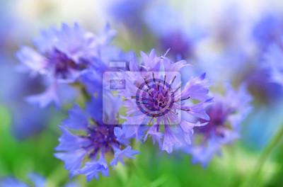 """Постер Цветы """"Постер 55043366"""", 30x20 см, на бумаге от Artwall"""