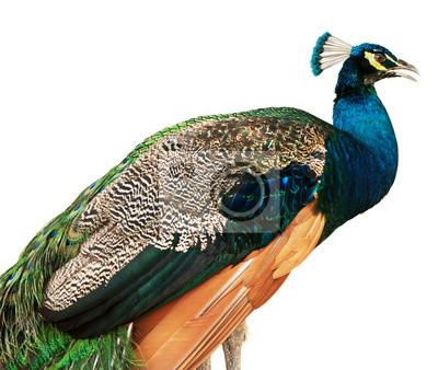 """Постер Птицы """"Постер 55301161"""", 24x20 см, на бумаге от Artwall"""