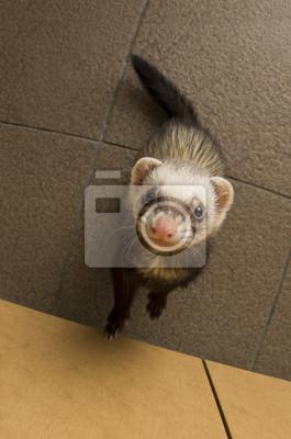 """Постер Животные """"Постер 55457243"""", 20x30 см, на бумаге от Artwall"""