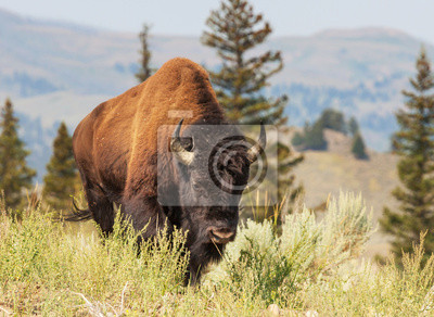 """Постер Животные """"Постер 55492924"""", 27x20 см, на бумаге от Artwall"""