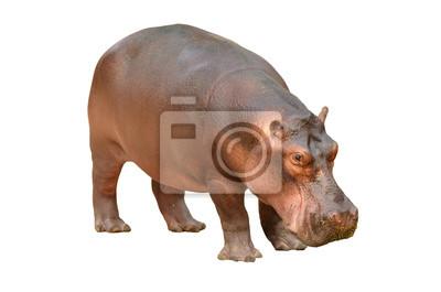 """Постер Животные """"Постер 56083358"""", 30x20 см, на бумаге от Artwall"""