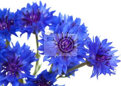 """Постер Цветы """"Постер 56396054"""", 28x20 см, на бумаге от Artwall"""