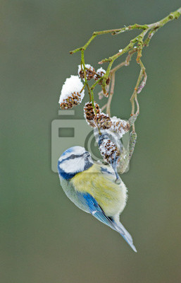 """Постер Птицы """"Постер 57198240"""", 20x31 см, на бумаге от Artwall"""