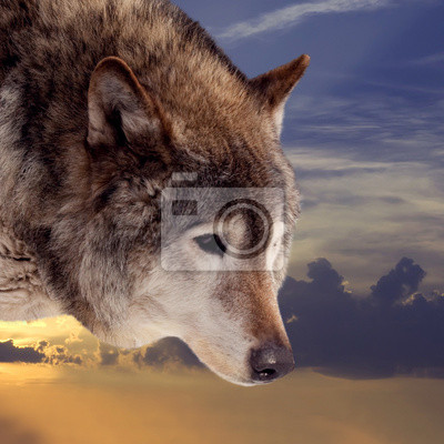 """Постер Животные """"Постер 57250614"""", 20x20 см, на бумаге от Artwall"""