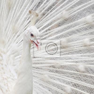 """Постер Птицы """"Постер 57772634"""", 20x20 см, на бумаге от Artwall"""