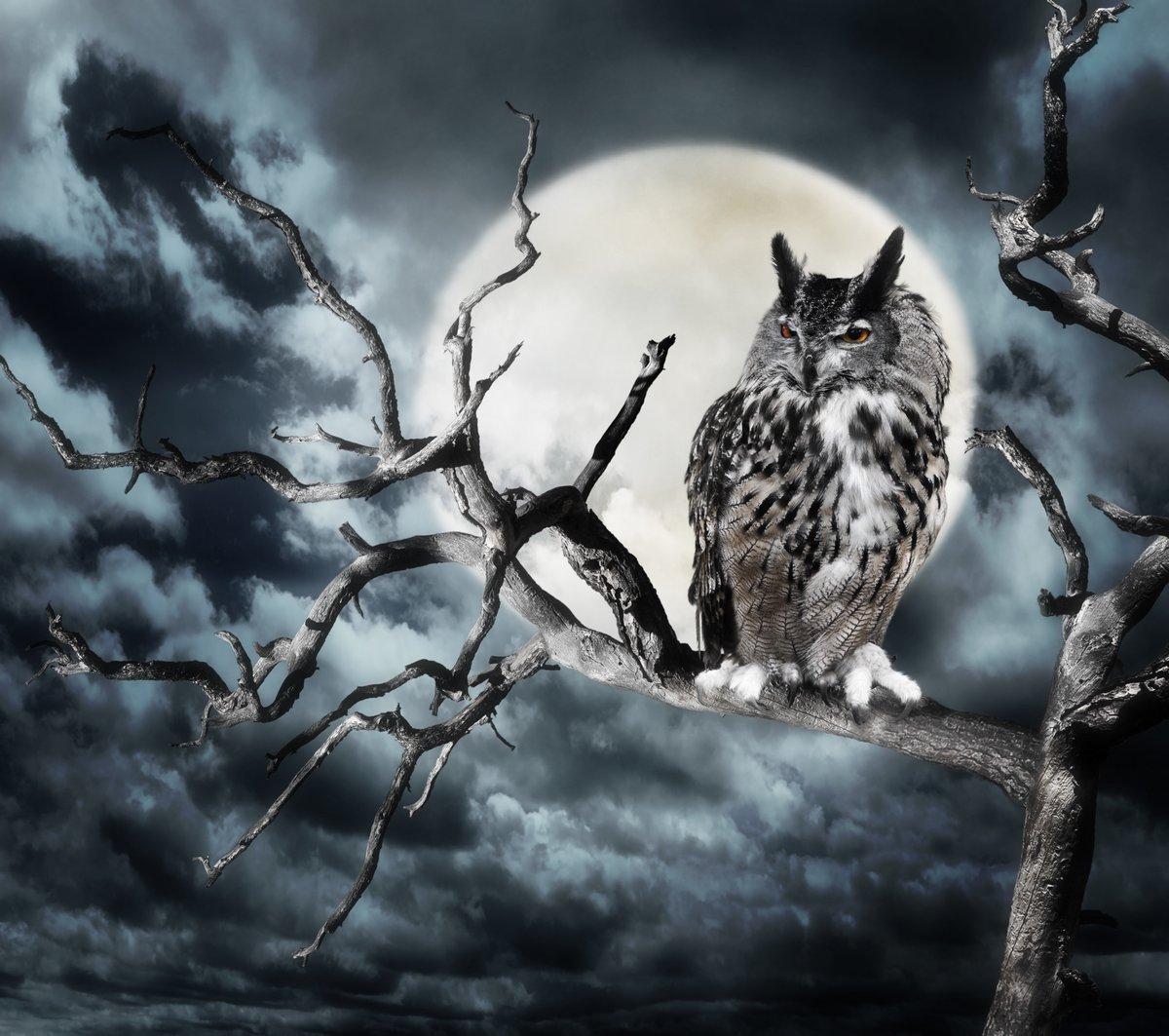 """Постер Птицы """"Постер 58462192"""", 23x20 см, на бумаге от Artwall"""