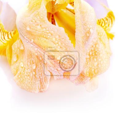 """Постер Цветы """"Постер 59095495"""", 20x20 см, на бумаге от Artwall"""