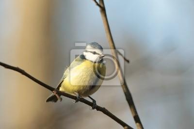 """Постер Птицы """"Постер 59901580"""", 30x20 см, на бумаге от Artwall"""