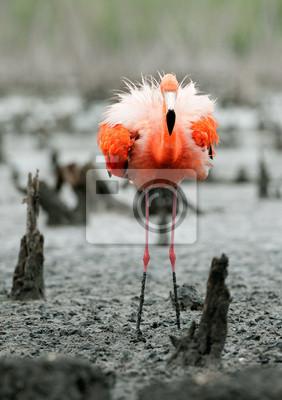 """Постер Птицы """"Постер 59910177"""", 20x28 см, на бумаге от Artwall"""