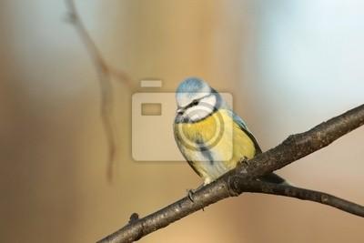 """Постер Птицы """"Постер 59993115"""", 30x20 см, на бумаге от Artwall"""