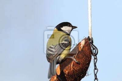 """Постер Птицы """"Постер 60088134"""", 30x20 см, на бумаге от Artwall"""