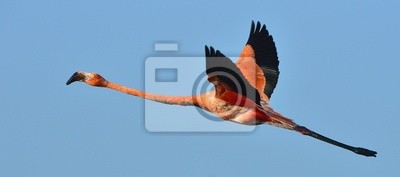"""Постер Птицы """"Постер 60256395"""", 45x20 см, на бумаге от Artwall"""